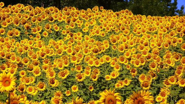 Tiempo de verano, ideal para disfrutar y planificar